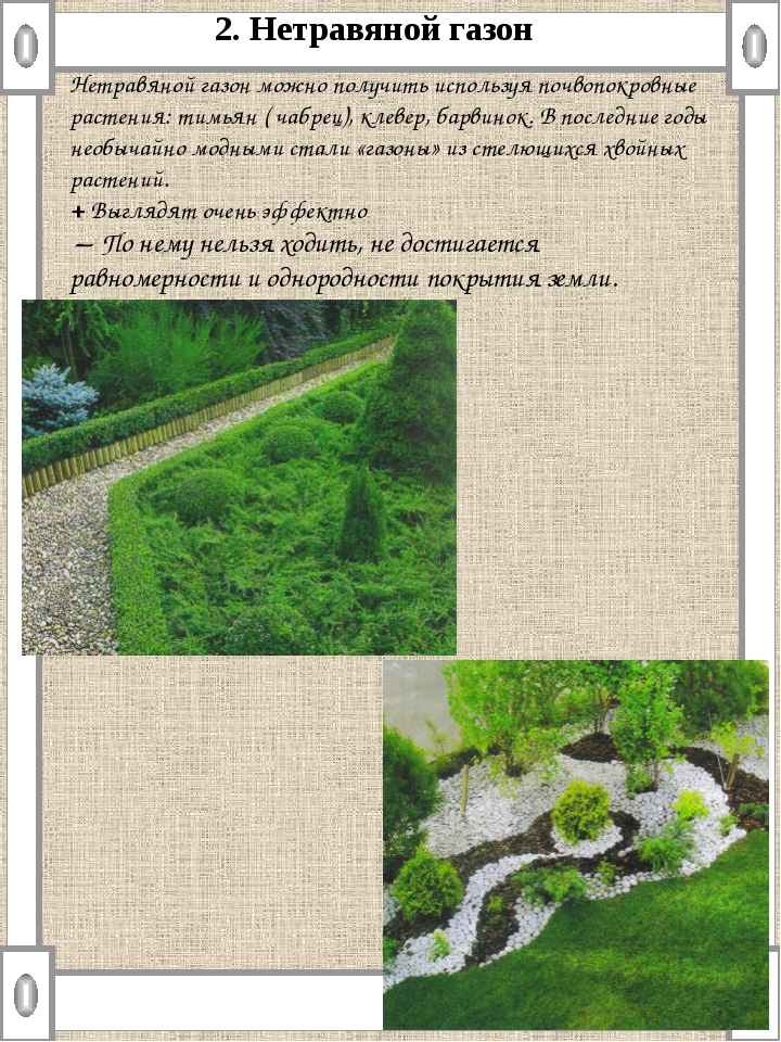 Нетравяной газон можно получить используя почвопокровные растения: тимьян ( ч...