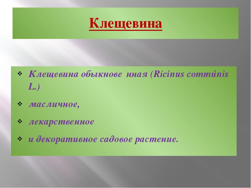 Клещевина Клещевина обыкнове́нная (Ricinus commúnis L.) масличное, лекарствен...