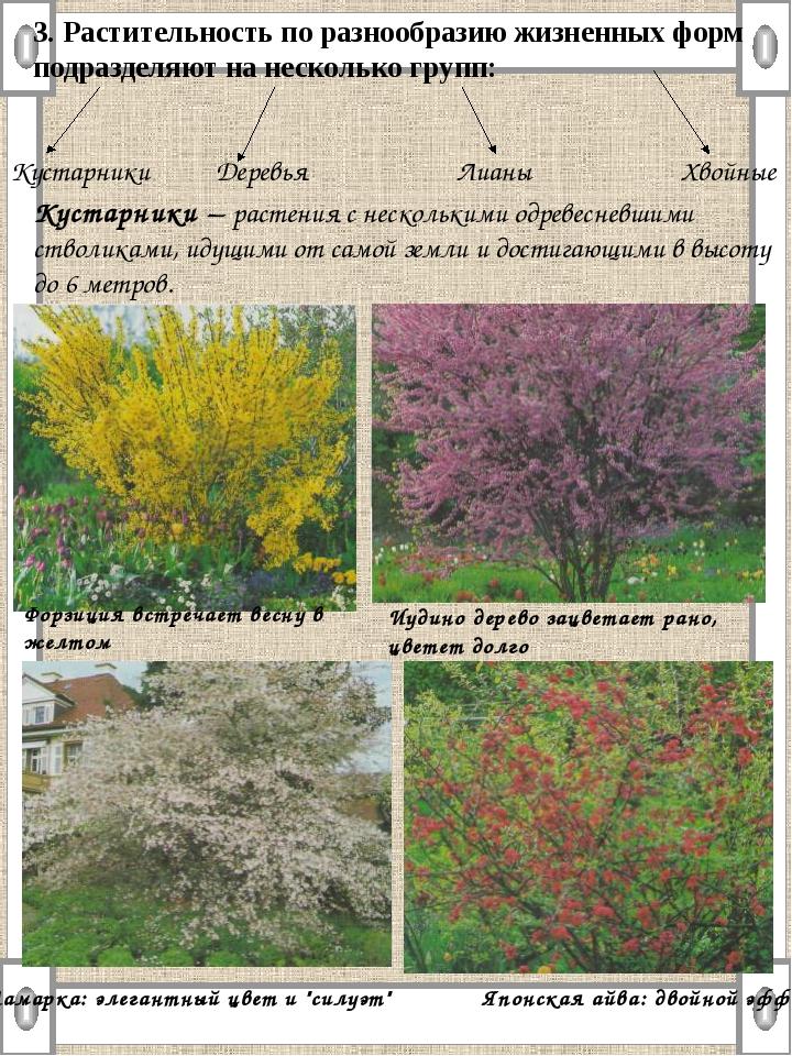 3. Растительность по разнообразию жизненных форм подразделяют на несколько гр...