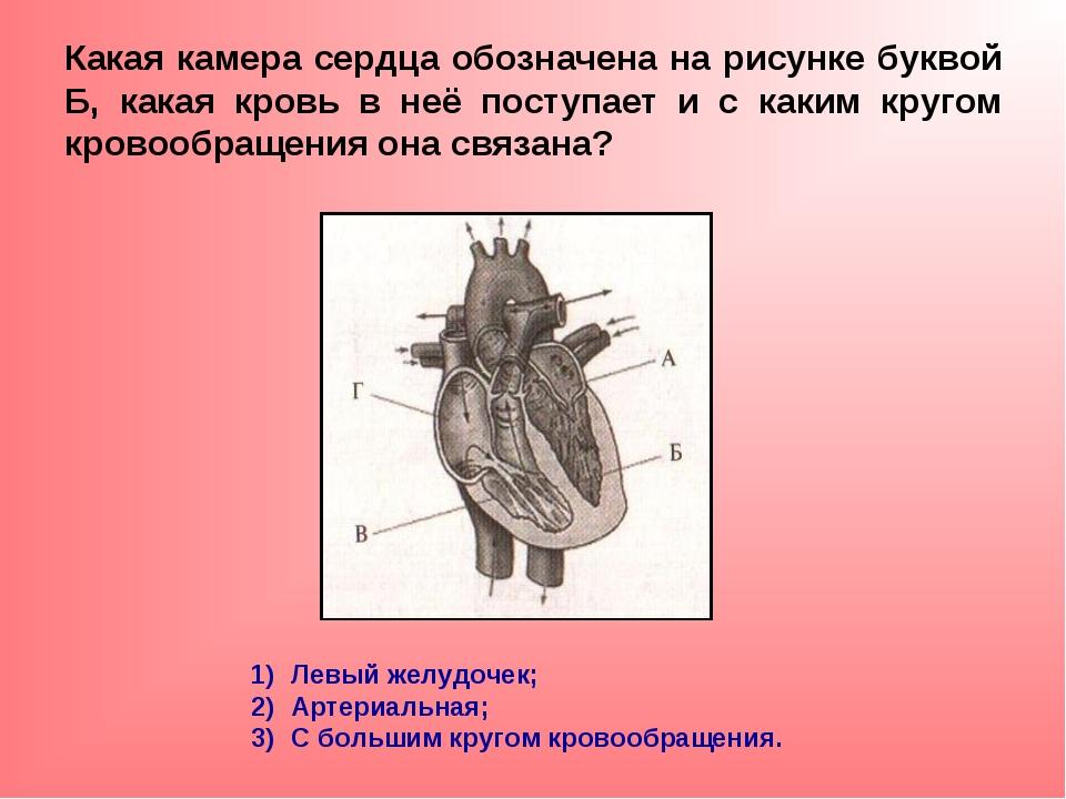 Какая камера сердца обозначена на рисунке буквой Б, какая кровь в неё поступа...