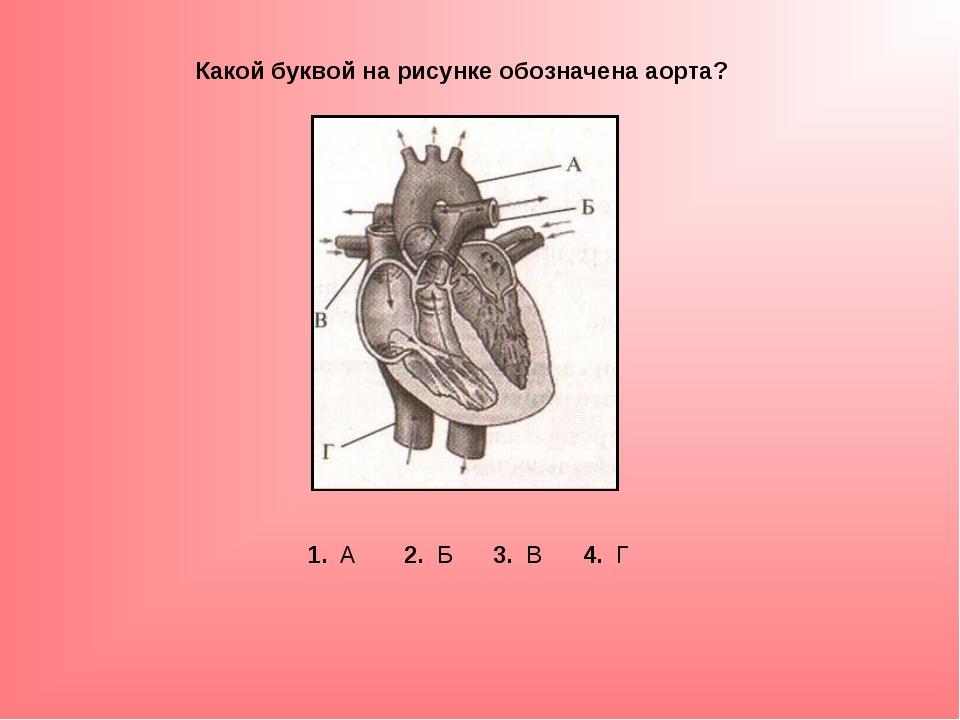 Какой буквой на рисунке обозначена аорта? 1. А 2. Б 3. В 4. Г