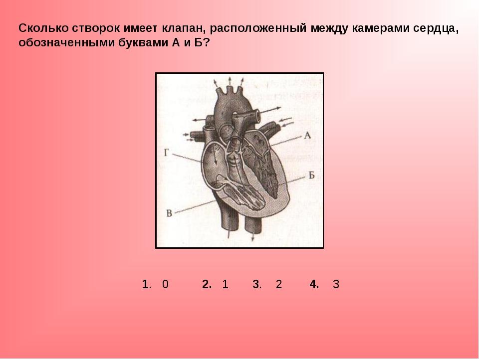 Сколько створок имеет клапан, расположенный между камерами сердца, обозначенн...
