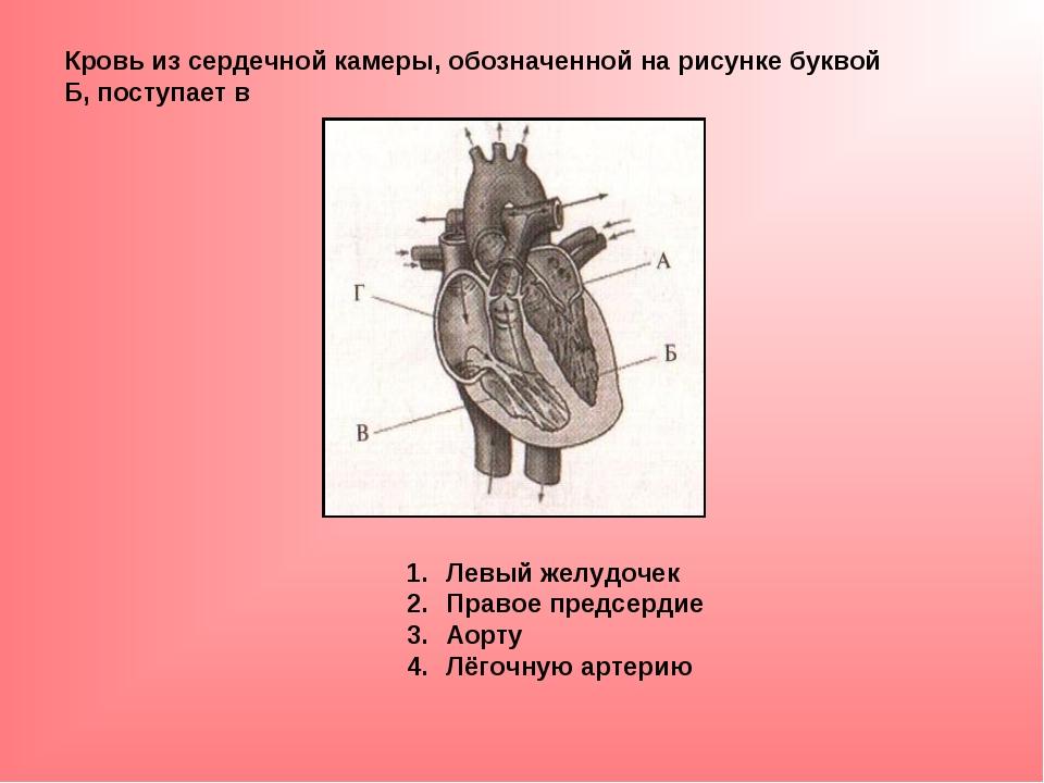 Кровь из сердечной камеры, обозначенной на рисунке буквой Б, поступает в Левы...
