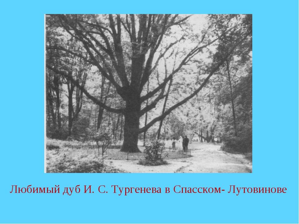 Любимый дуб И. С. Тургенева в Спасском- Лутовинове
