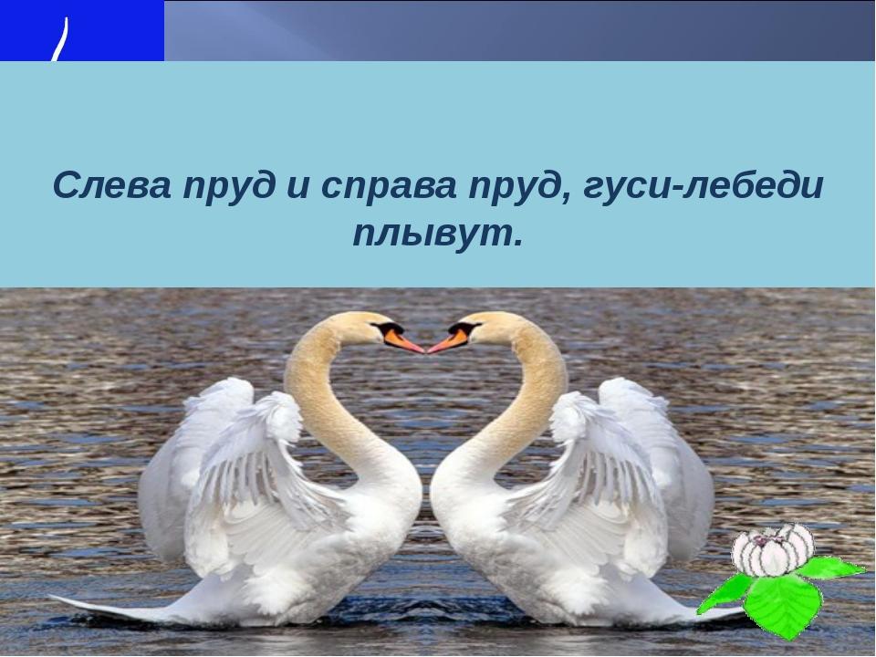Слева пруд и справа пруд, гуси-лебеди плывут.