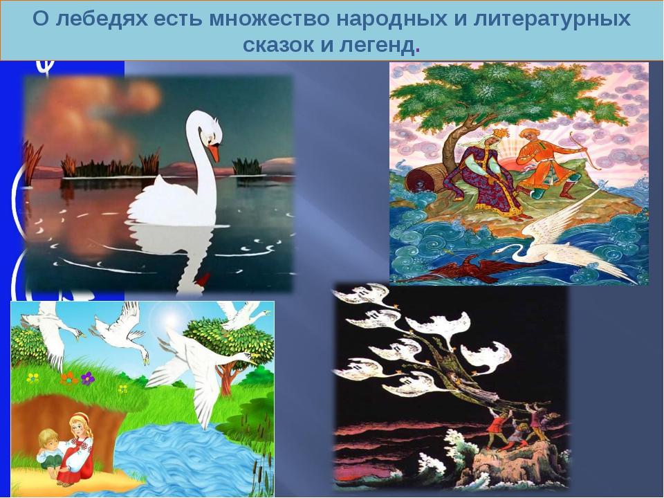 О лебедях есть множество народных и литературных сказок и легенд.