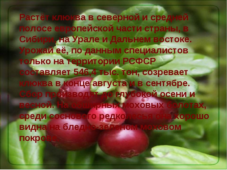 Растёт клюква в северной и средней полосе европейской части страны, в Сибири,...