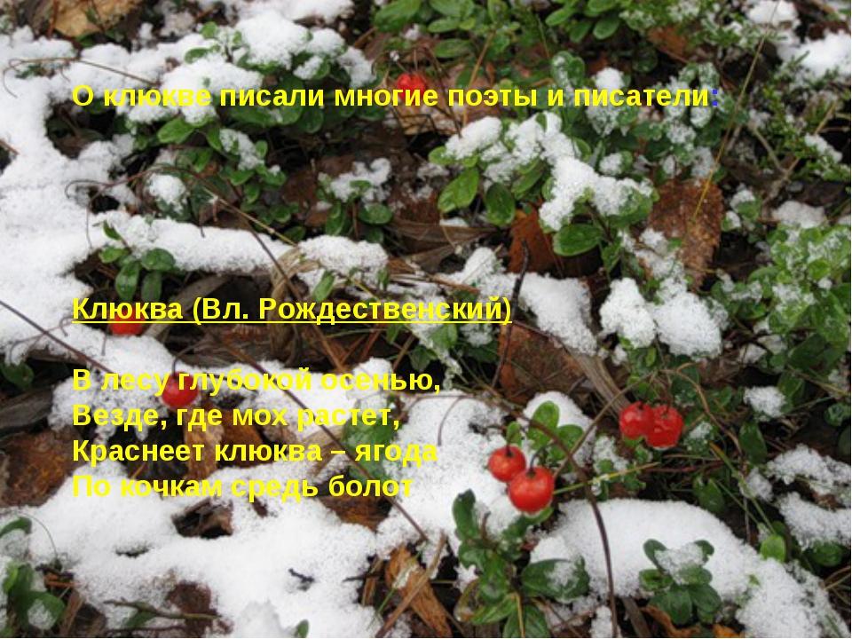 О клюкве писали многие поэты и писатели: Клюква (Вл. Рождественский) В лесу г...