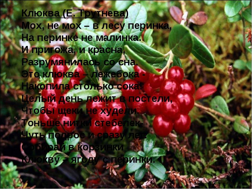 Клюква (Е. Трутнева) Мох, не мох – в лесу перинка, На перинке не малинка. И п...