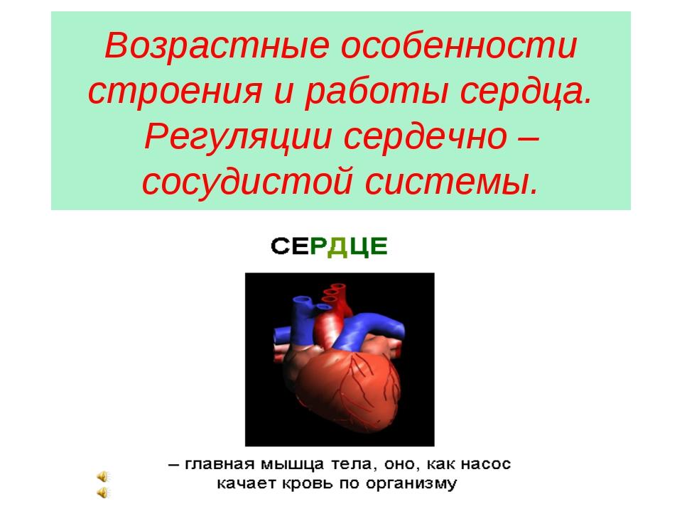 Возрастные особенности строения и работы сердца. Регуляции сердечно – сосудис...