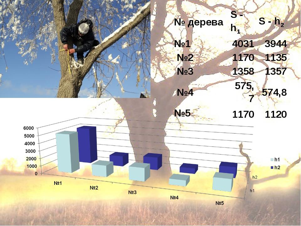№ дереваS - h1S - h2 №140313944 №211701135 №313581357 №4575,7574,8...