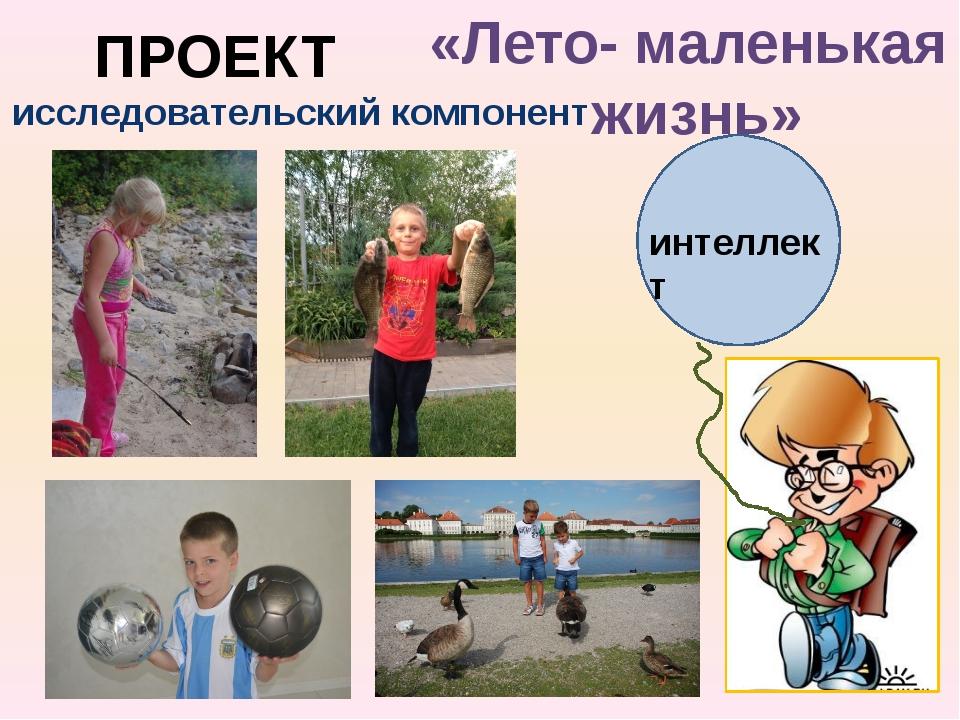 интеллект ПРОЕКТ «Лето- маленькая жизнь» исследовательский компонент