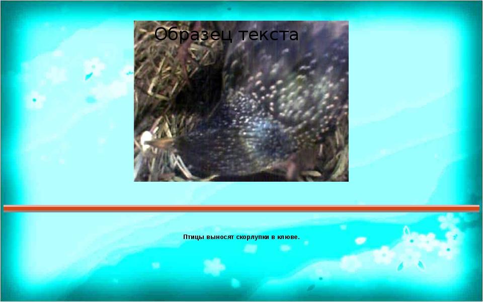 Птицы выносят скорлупки в клюве. Правильный ответ Пояснения Ответ 1 2 3 4 5 6...
