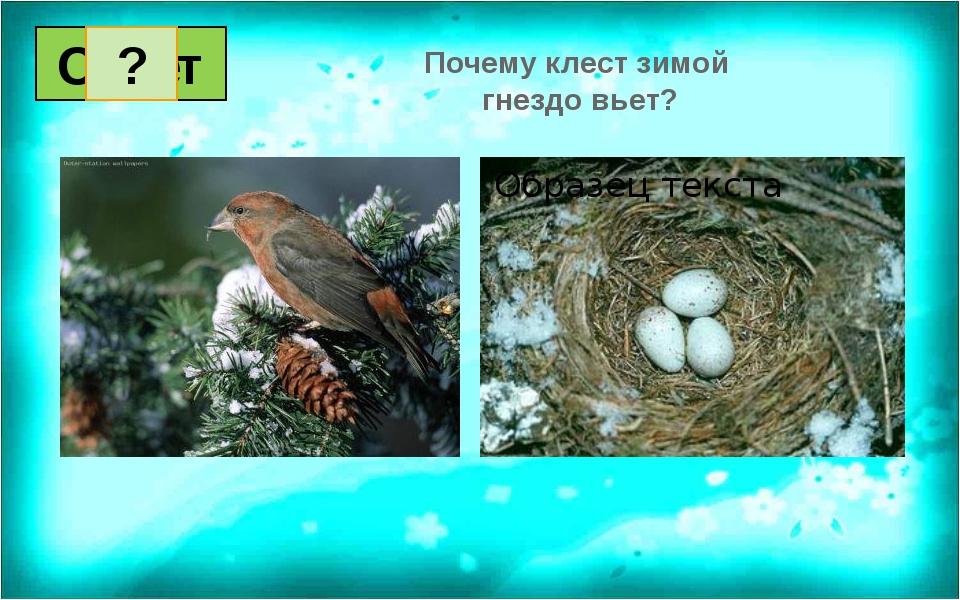 Почему клест зимой гнездо вьет? Вопрос Ответ 1 2 3 4 5 6 7 8 9 10 11 12 13 14...