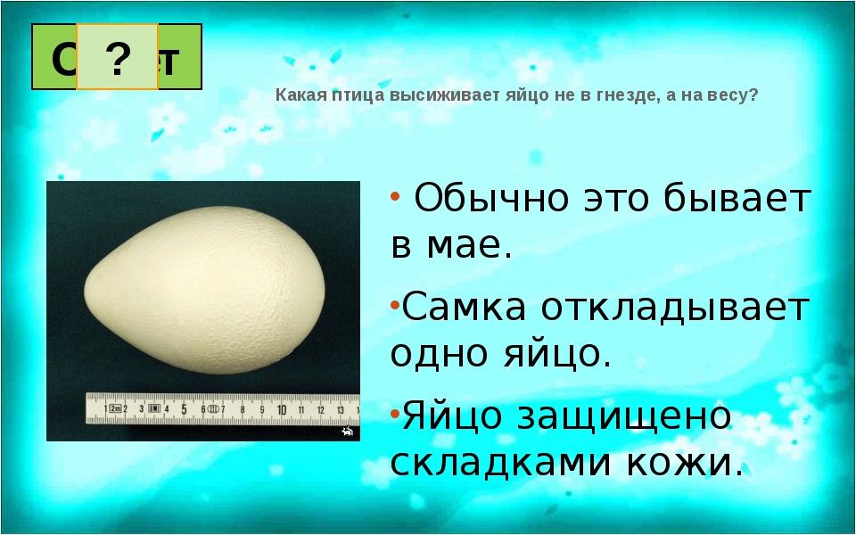 Обычно это бывает в мае. Самка откладывает одно яйцо. Яйцо защищено складкам...