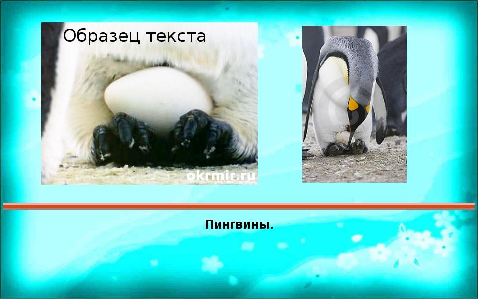 Пингвины. Правильный ответ Пояснения Ответ 1 2 3 4 5 6 7 8 9 10 11 12 13 14 1...