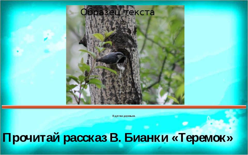В дуплах деревьев. Прочитай рассказ В. Бианки «Теремок» Правильный ответ Поя...