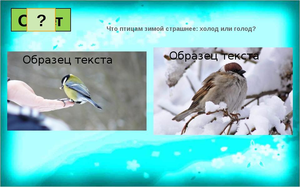 Что птицам зимой страшнее: холод или голод? Вопрос Ответ 1 2 3 4 5 6 7 8 9 1...
