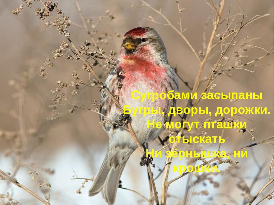 Сугробами засыпаны Бугры, дворы, дорожки. Не могут пташки отыскать Ни зёрнышк...