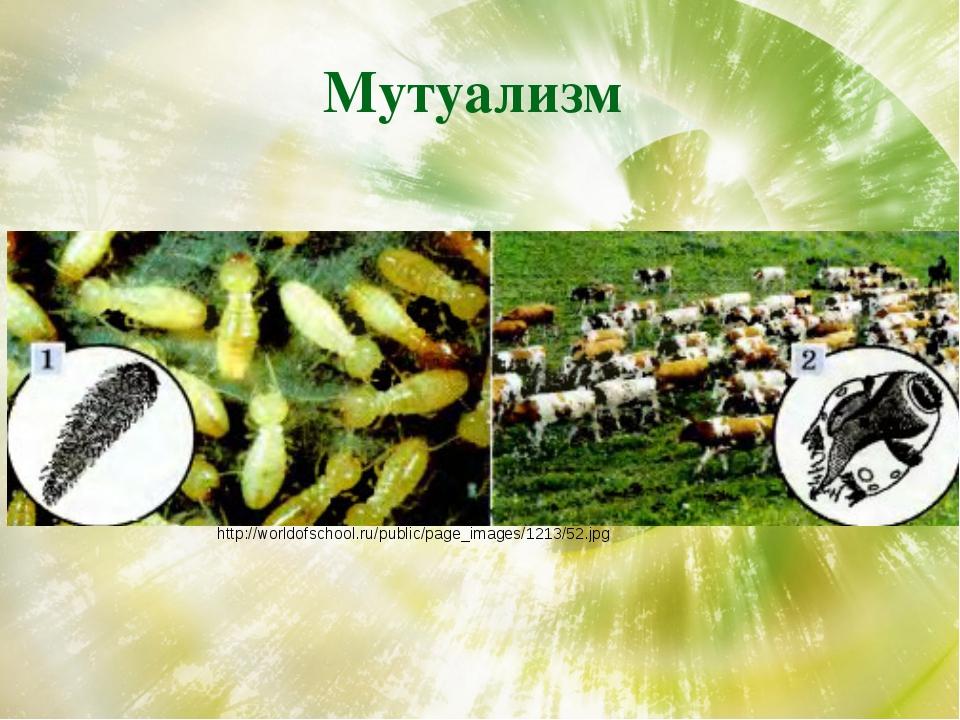 Мутуализм http://worldofschool.ru/public/page_images/1213/52.jpg