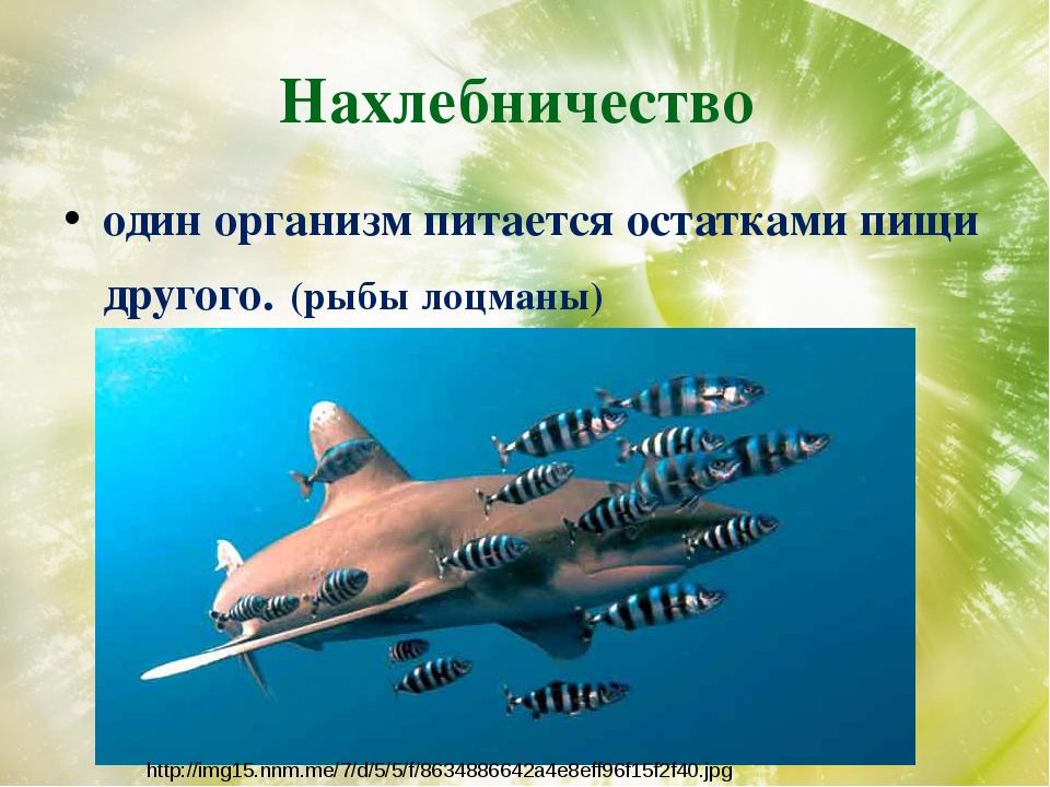 Нахлебничество один организм питается остатками пищи другого. (рыбы лоцманы)...