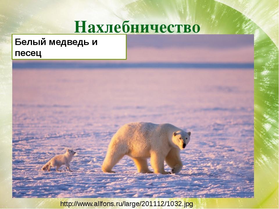 Нахлебничество http://www.allfons.ru/large/201112/1032.jpg Белый медведь и пе...