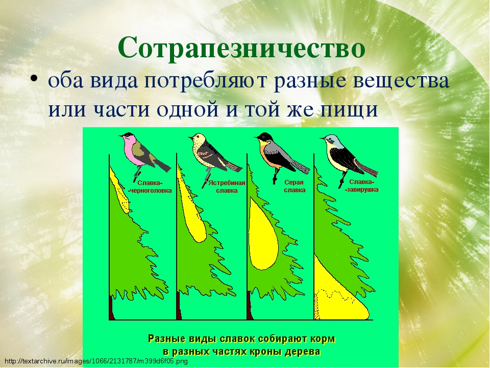 Сотрапезничество оба вида потребляют разные вещества или части одной и той же...