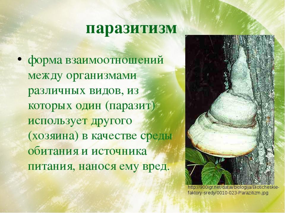 паразитизм форма взаимоотношений между организмами различных видов, из которы...
