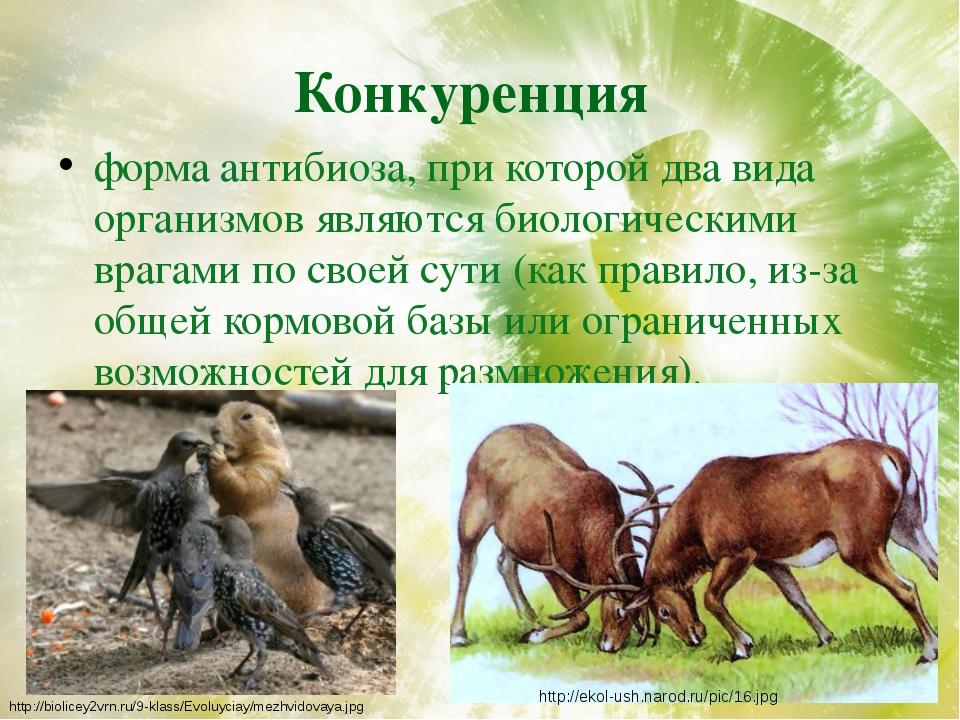 Конкуренция форма антибиоза, при которой два вида организмов являются биологи...
