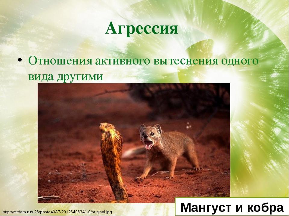 Агрессия Отношения активного вытеснения одного вида другими Мангуст и кобра h...