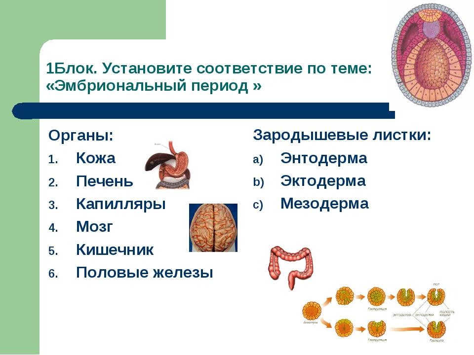 1Блок. Установите соответствие по теме: «Эмбриональный период » Органы: Кожа...