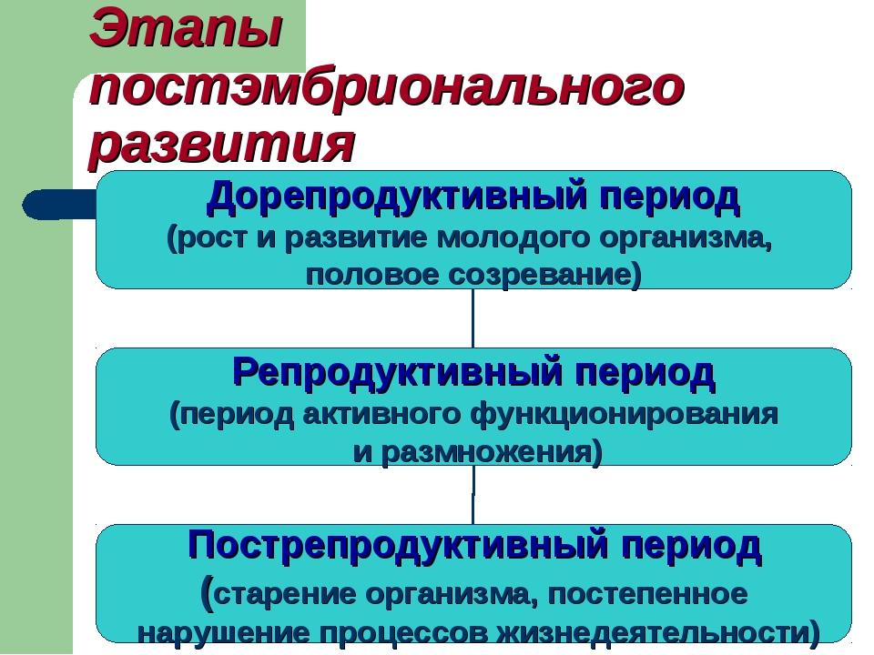 Этапы постэмбрионального развития