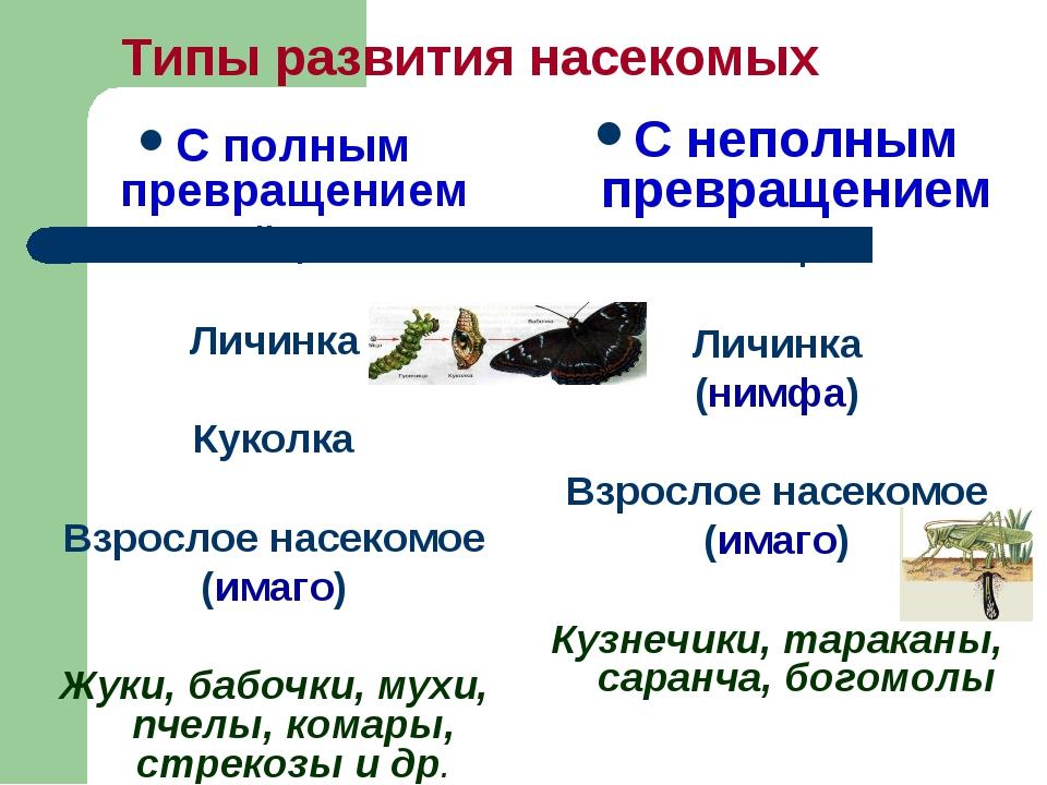 Типы развития насекомых С полным превращением Яйцо Личинка Куколка Взрослое н...