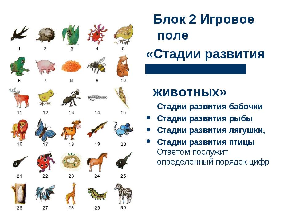 Блок 2 Игровое поле «Стадии развития животных» Стадии развития бабочки Стади...