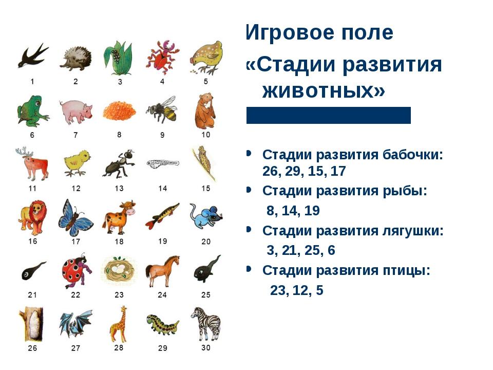 Игровое поле «Стадии развития животных» Стадии развития бабочки: 26, 29, 15,...