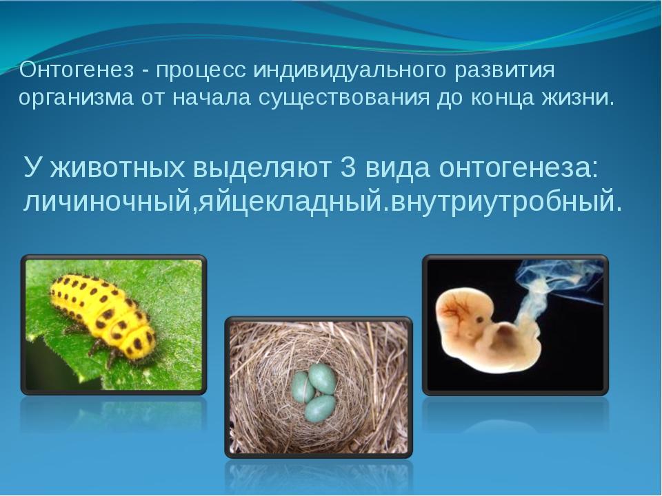У животных выделяют 3 вида онтогенеза: личиночный,яйцекладный.внутриутробный....