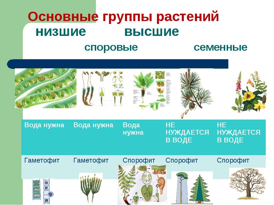 Основные группы растений низшие высшие споровые семенные Вода нужнаВода нужн...