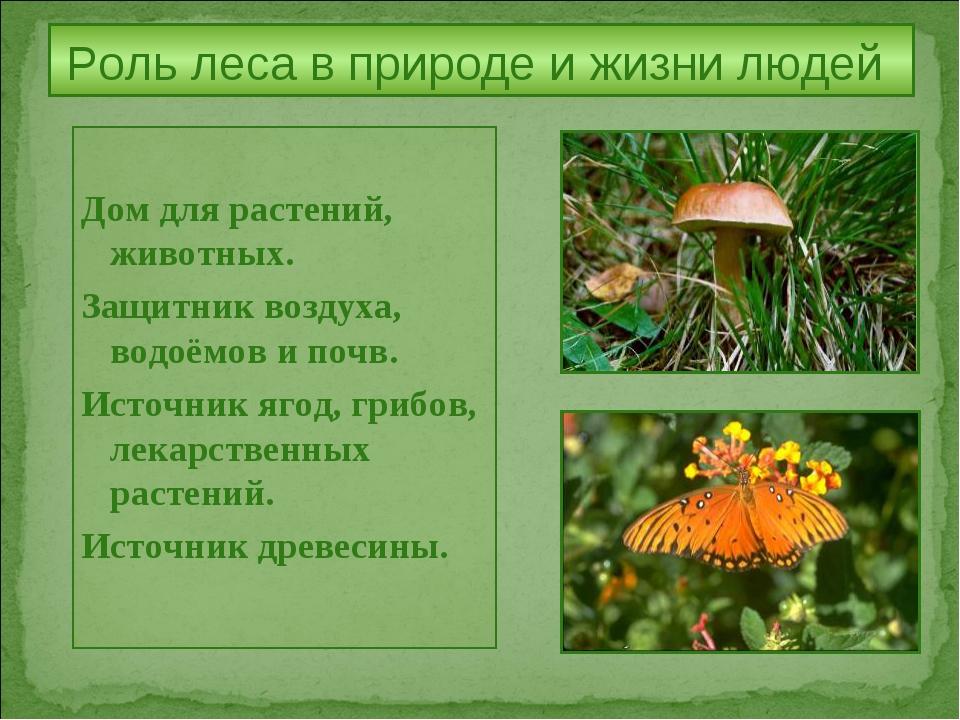 Роль леса в природе и жизни людей Дом для растений, животных. Защитник воздух...