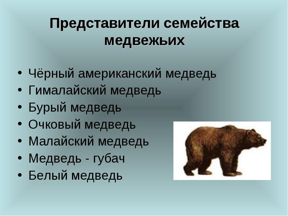 Представители семейства медвежьих Чёрный американский медведь Гималайский мед...