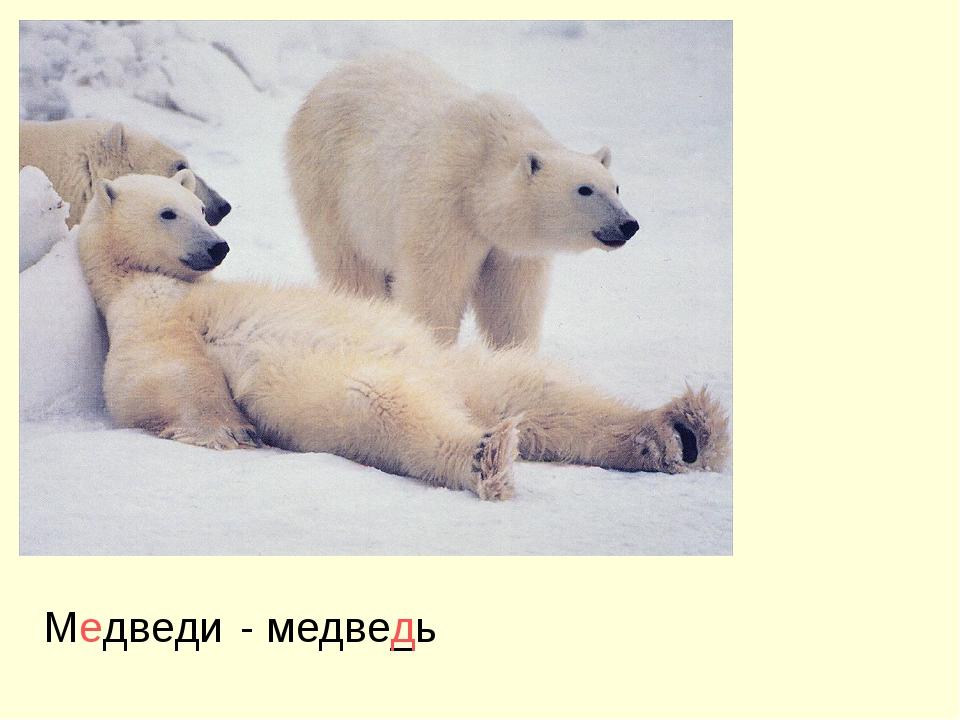 Медведи - медве_ь д