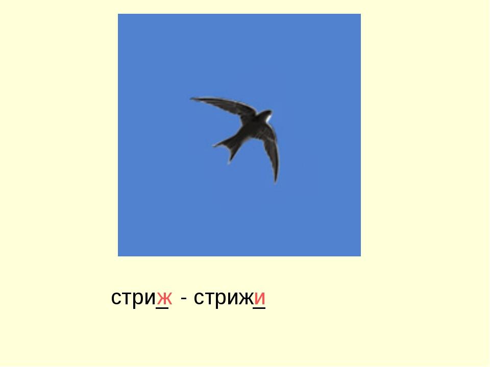 - стриж_ стри_ ж и