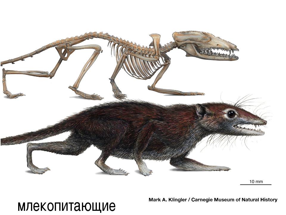млекопитающие автор-составитель: Карташова М.А. (МБОУ СОШ № 37)