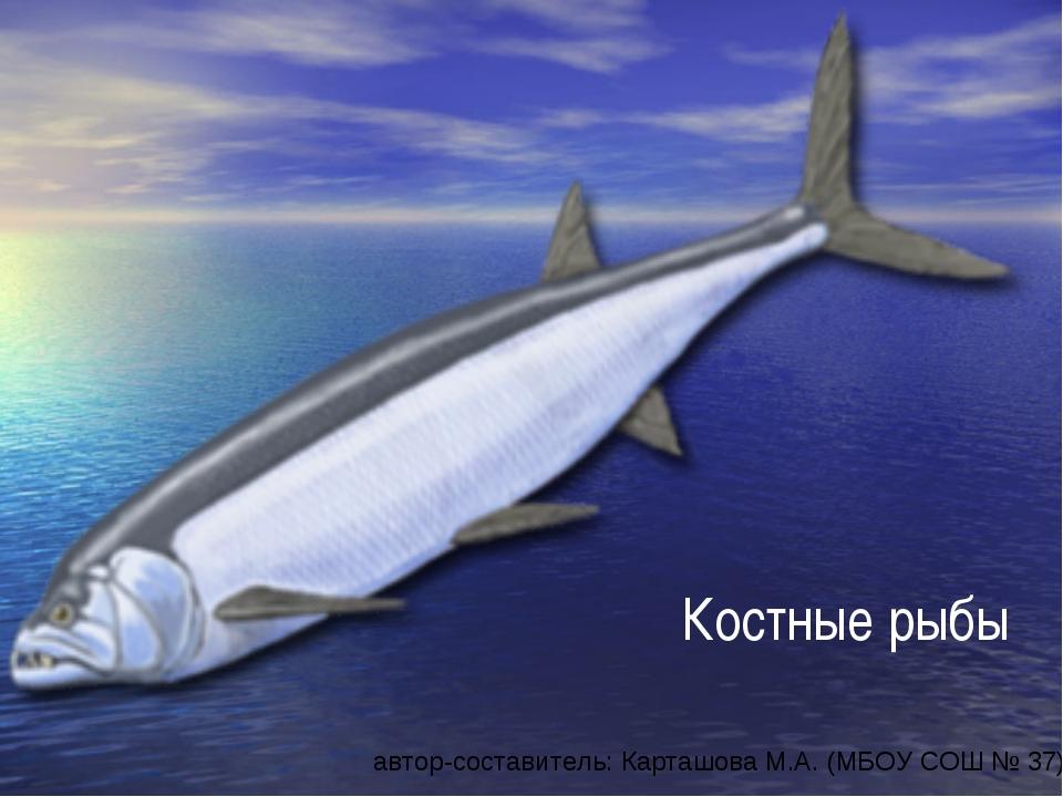 Костные рыбы автор-составитель: Карташова М.А. (МБОУ СОШ № 37)