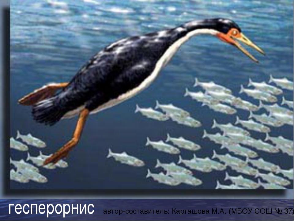 гесперорнис автор-составитель: Карташова М.А. (МБОУ СОШ № 37)