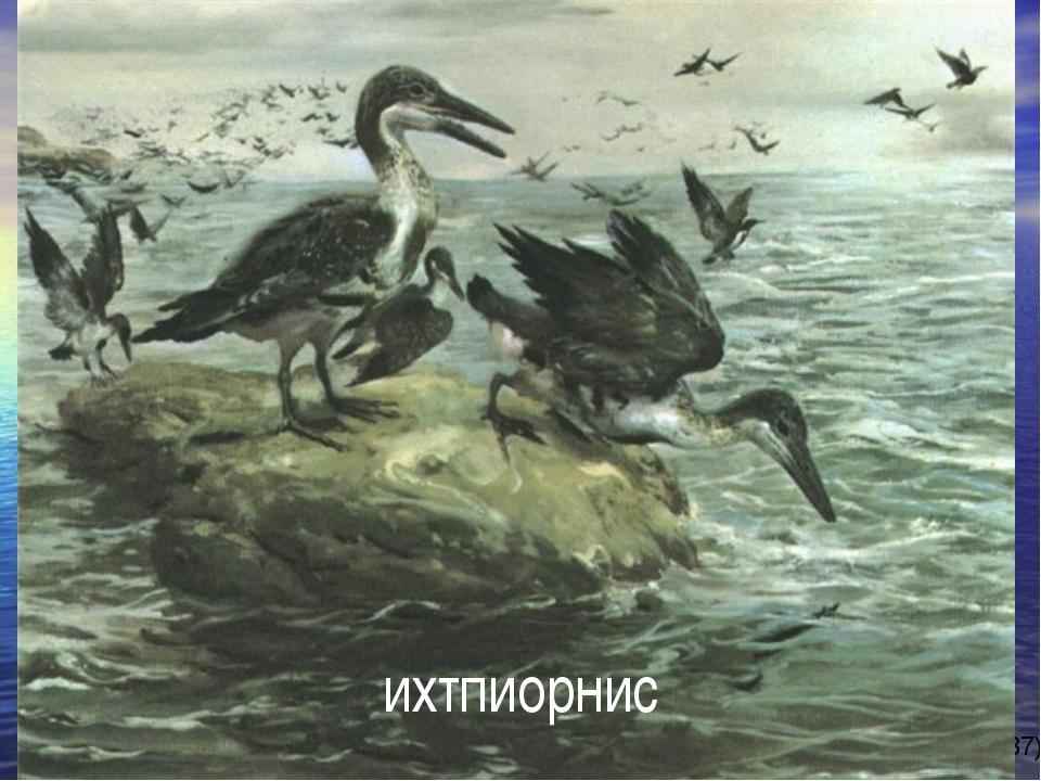 ихтпиорнис автор-составитель: Карташова М.А. (МБОУ СОШ № 37)
