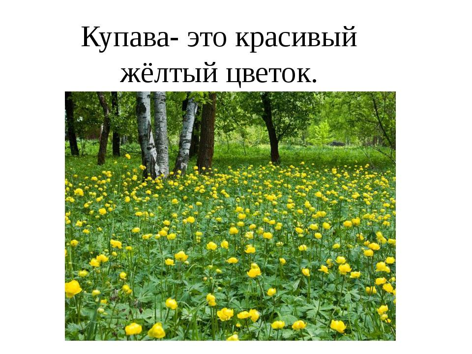 Купава- это красивый жёлтый цветок.