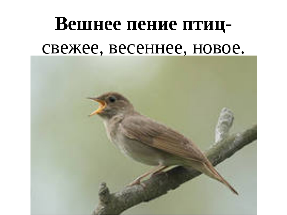 Вешнее пение птиц- свежее, весеннее, новое.