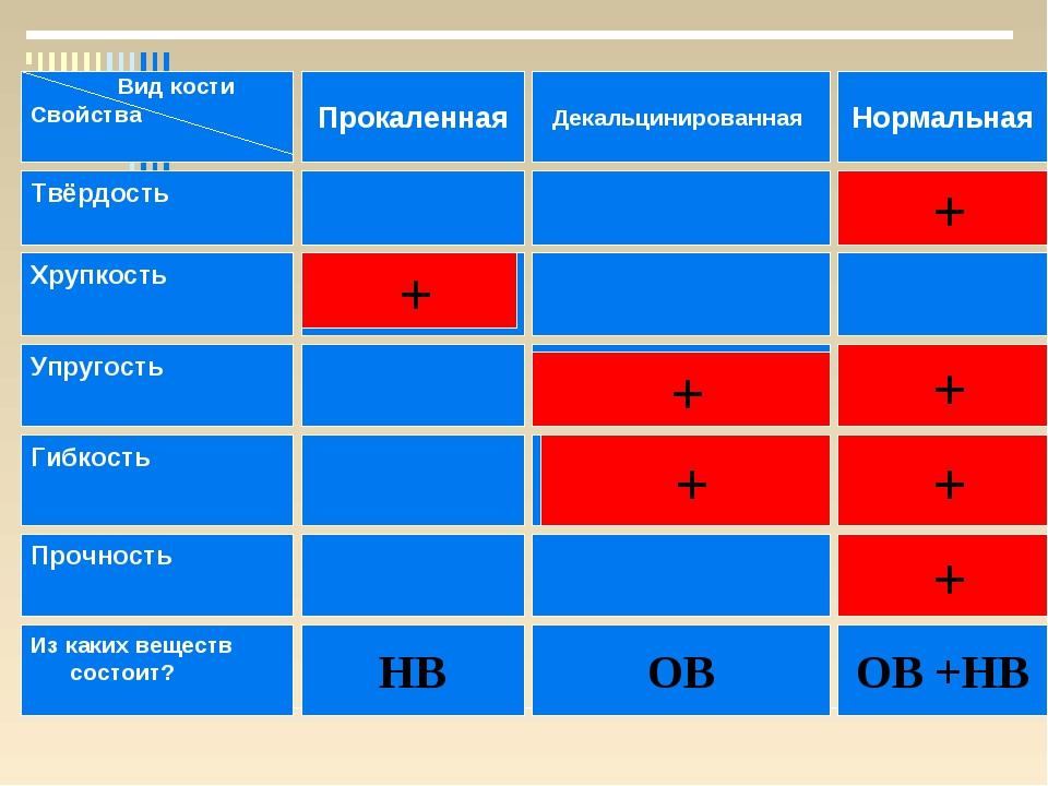 Декальцинированная Вид кости Свойства Прокаленная Нормальная Твёрдость ОВ Хру...