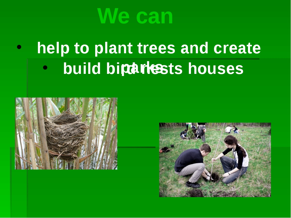 We can help to plant trees and create parks build bird nests houses
