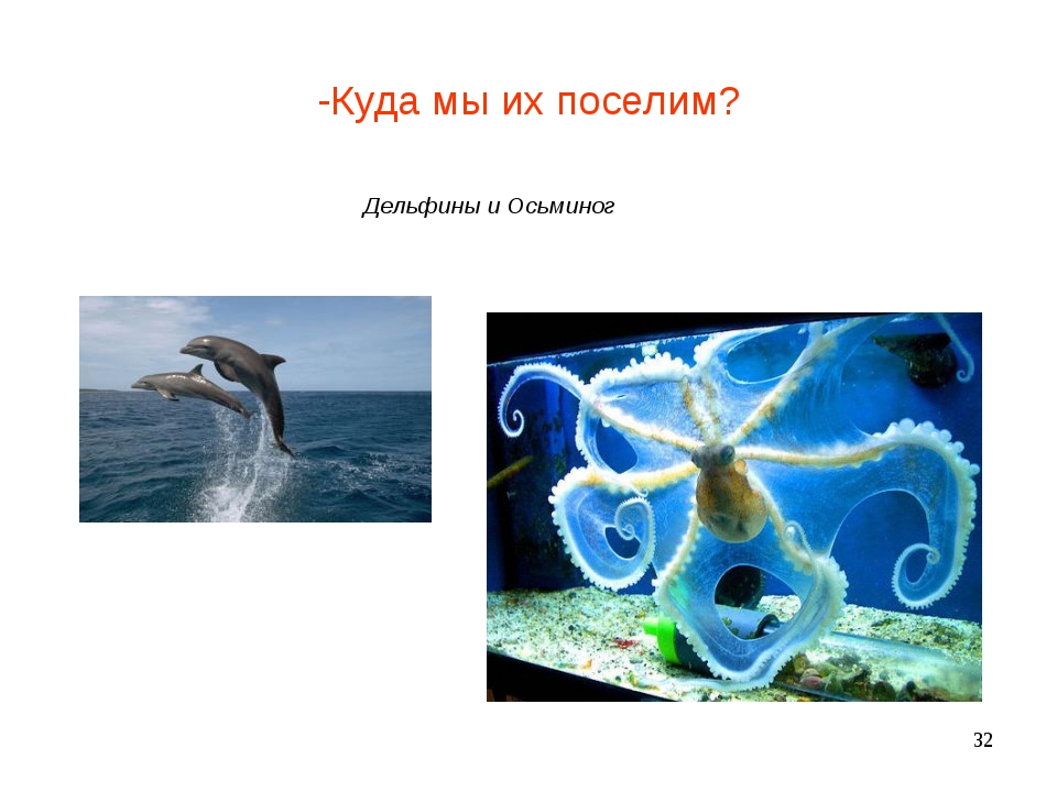 -Куда мы их поселим? Дельфины и Осьминог